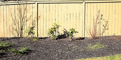 Light tan, cream, yellow outdoor fence in residential neighborhood - Residential painting